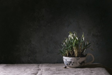 Blossom snowdrops in ceramic mug standing on linen tablecloth in dark room. Spring interior decorations. Stockfoto