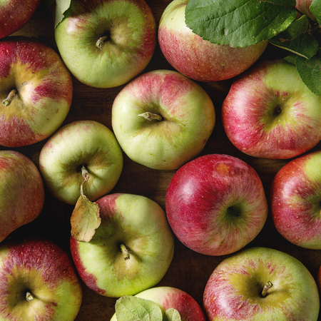 Close up of ripe organic gardening green red apples with leaves as food background. Flat lay. Autumn harvest. Square images Stock Photo