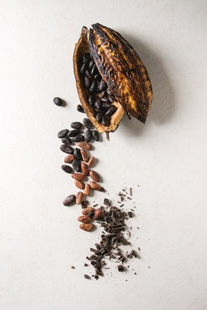 Variety of fresh and dry cocoa beans from cocoa pod with chopped dark chocolate over white texture background. Flat lay, space