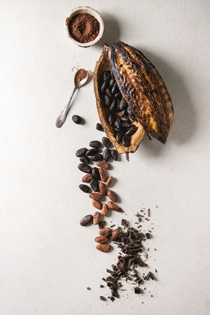 Variety of fresh and dry cocoa beans from cocoa pod with chopped dark chocolate and cocoa powder over white texture background. Flat lay, space 版權商用圖片