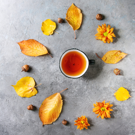 Cup of hot tea decorated by yellow autumn leaves, aster flowers and acorns over grey texture background. Flat lay, space. Seasonal background. Square image Banco de Imagens