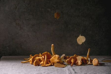 Forest chanterelle mushrooms, raw uncooked, with falling yellow autumn leaves on grey linen table cloth with concrete wall at background. Copy space, dark fall mood