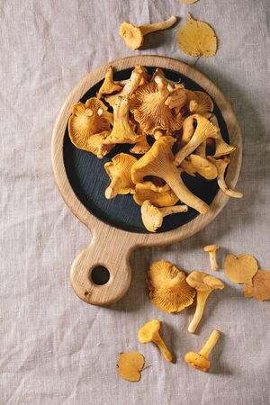 Forest chanterelle mushrooms, raw uncooked, on wooden cutting board with yellow autumn leaves over grey linen table cloth as background. Flat lay, space 版權商用圖片