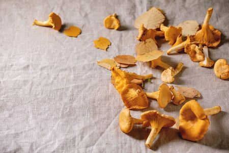 Forest chanterelle mushrooms, raw uncooked, with yellow autumn leaves over grey linen table cloth as background. Copy space