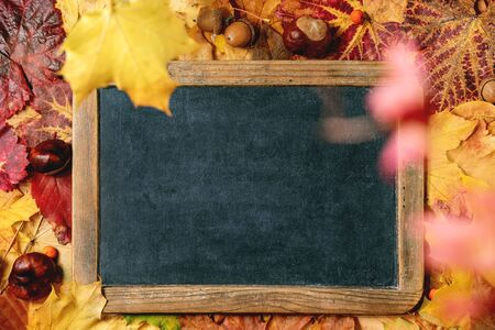 Vintage black empty chalkboard over variety of red and yellow autumn leaves background. Flat lay. Fall creative background.