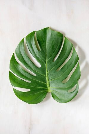 Tropical jungle Monstera leaf with water spots over white marble background.