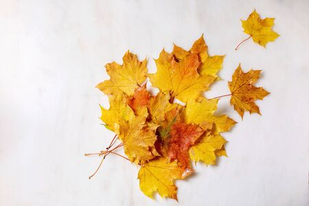 Red and yellow autumn maple leaves over white marble background. Flat lay. Fall creative background. 写真素材