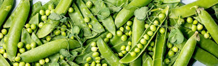 Heap of young sweet organic green pea in pods with sprouts. Flat lay, banner