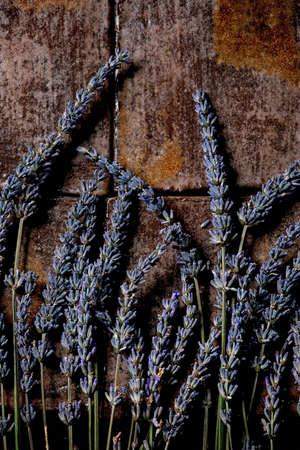 Fresh and dry lavender flowers over dark brown ceramic tile. Flat lay, space 版權商用圖片 - 151740956