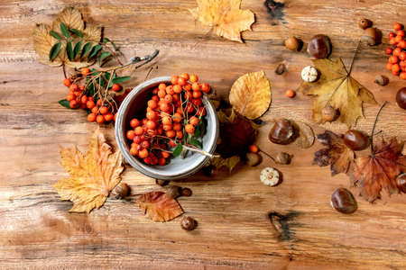 Autumn fall seasonal composition with ceramic bowls, yellow maple leaves, rowan berries, chestnuts and decorative pumpkins over wooden texture background. Flat lay, copy space