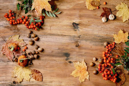 Autumn fall seasonal composition with yellow maple leaves, rowan berries, chestnuts and decorative pumpkins over wooden texture background. Flat lay, copy space