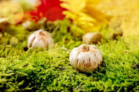 White Ceramic Halloween pumpkins on moss with autumnal background. Fall seasonal Halloween greeting