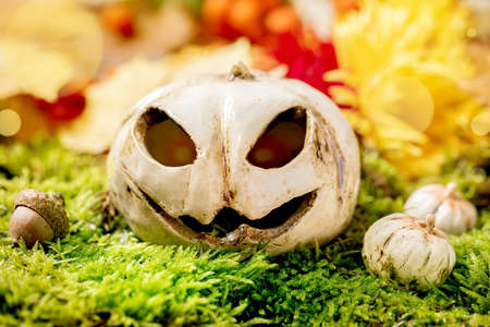 White Ceramic Halloween jack-o-lantern pumpkins on moss with autumnal background. Fall seasonal Halloween greeting