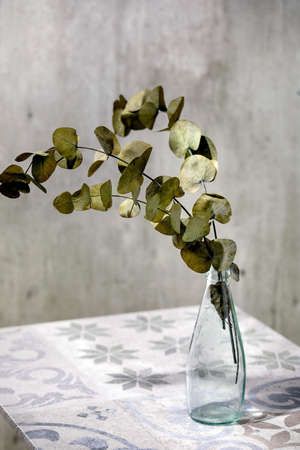Eucalyptus branches round leaves in glass bottle standing on ornate ceramic table. Sunlight, shadows.