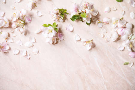 Flat lay of spring apple blooming flowers and petals over pink marble background. Copy space Stok Fotoğraf
