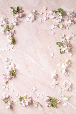 Flat lay of spring apple blooming flowers and petals as border frame over pink marble background. Copy space
