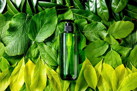 Empty green plastic bottle for soap on background made of green leaves, green gradient. Eco friendly cosmetic product presentation. Place for label. Copy space. Nature creative layout, top view. 版權商用圖片
