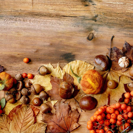 Autumn fall seasonal composition with yellow maple leaves, rowan berries, chestnuts and decorative pumpkins over wooden texture background. Flat lay, copy space. Square