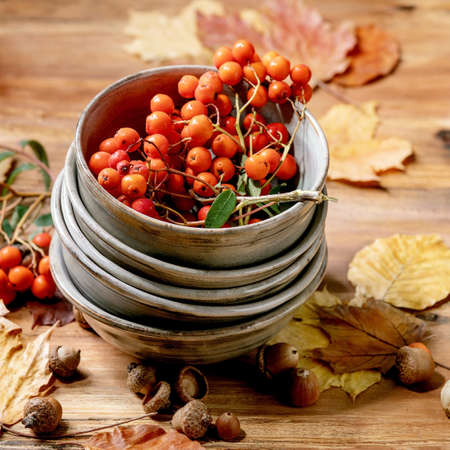 Autumn fall seasonal composition with stack of ceramic bowls, yellow maple leaves, rowan berries, chestnuts and decorative pumpkins over wooden texture background. Square 版權商用圖片