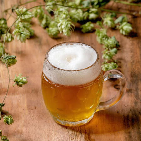 Classic glass mug of fresh cold foamy lager beer with green hop cones behind over wooden texture background. Copy space. Square