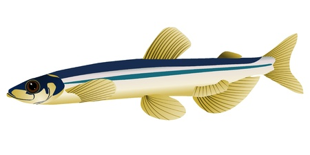 vector image of capelin Stock Vector - 11663332