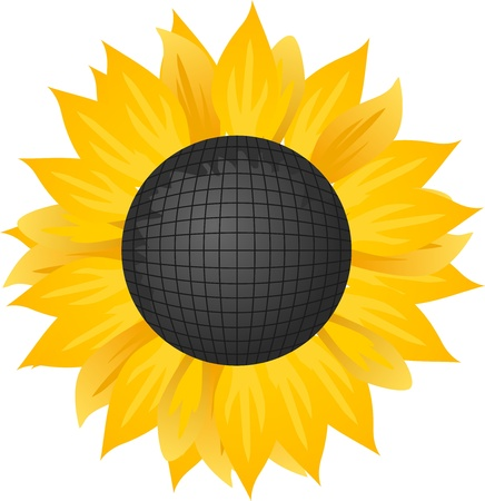 illustration of a sunflower. Vector