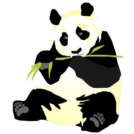 �  giant panda: panda gigante Vectores