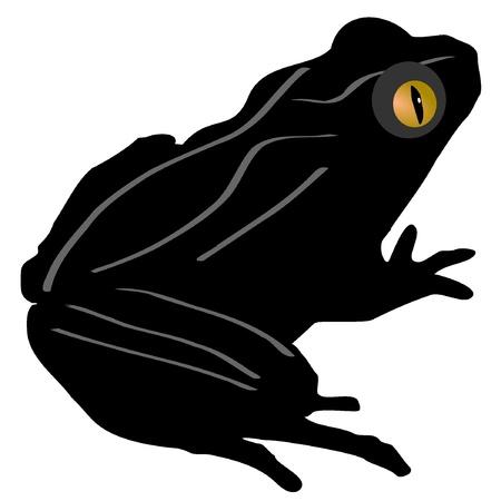 red eyed tree frog: Pelodytes Caucasicus
