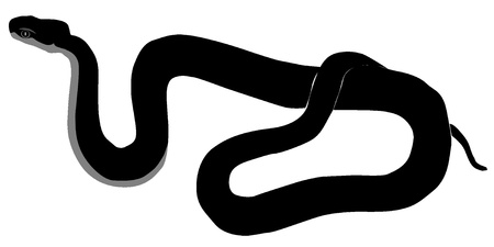 Vector image of Caucasus viper Stock Vector - 11891038