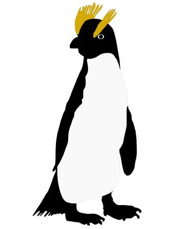 Vector drawing of penguin Vector