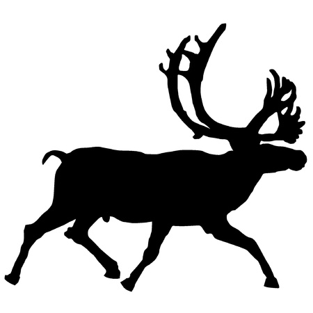 Vector illustration of reindeer on a white background Vector