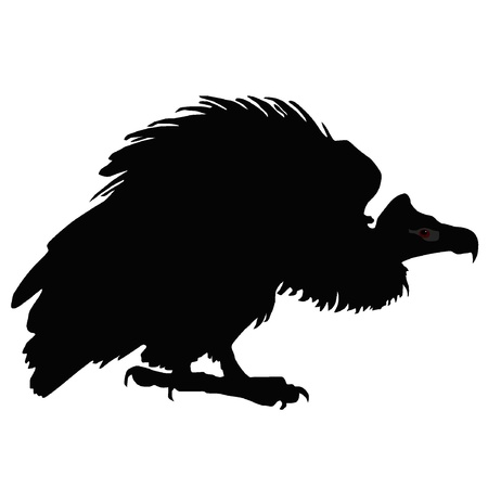 Vector illustration of black vulture on a white background Vector