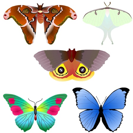 naturism: Vector Collection of butterflies
