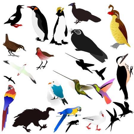 Vector collection of birds Vector