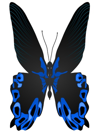 beautiful vector butterfly Stock Vector - 11897542