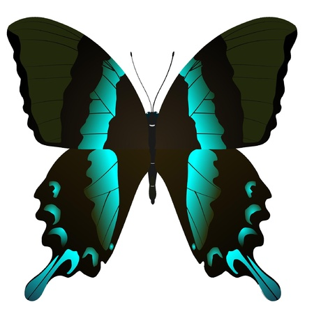 beautiful vector butterfly Stock Vector - 11897613