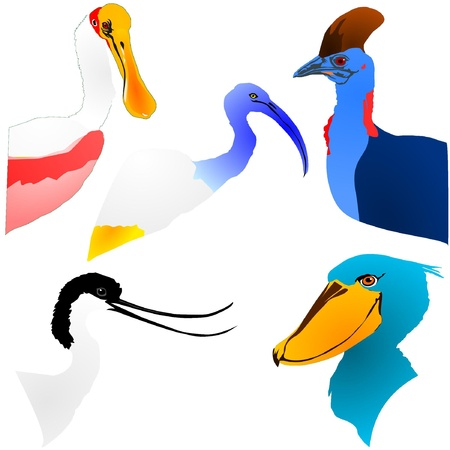 collection of color bird's head Vector