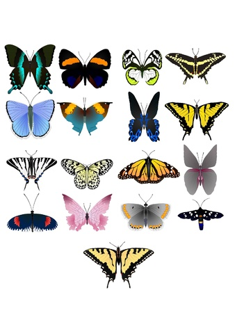 Collection of vector images of beautiful butterflies Vector