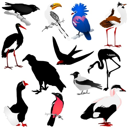 Collection of vector images of birds Vector