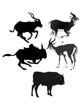 Collection of vector images of antelopes Vector