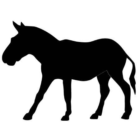 one animal: Vector illustration of a donkey
