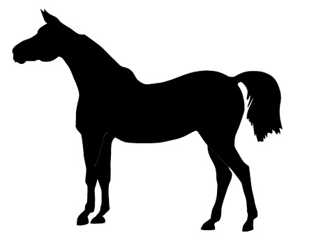 pedigreed: Vector illustration of a horse