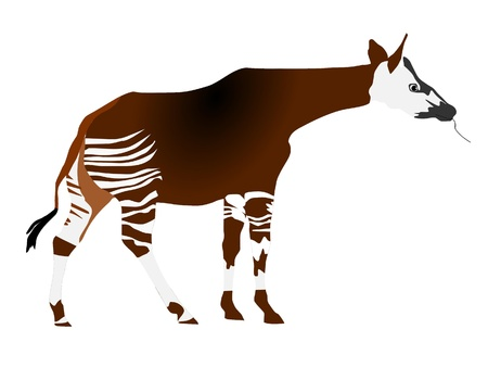vectors okapi Stock Vector - 11897516