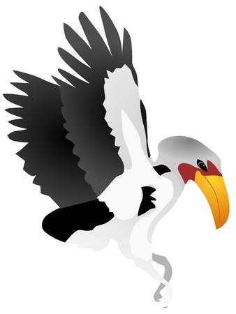 hornbill: Vector illustration of hornbill Illustration