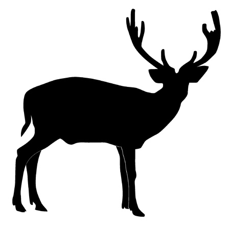 whitetail buck: Vector illustration of deer