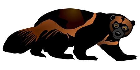 wolverine: Vector illustration of wolverine