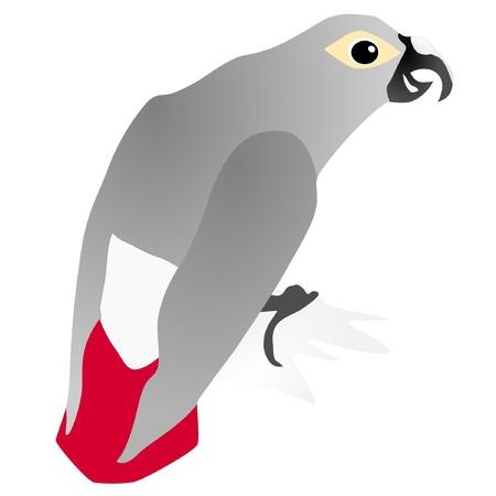 vectors gray parrot Jaco Stock Vector - 11897486