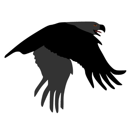 Vector image of an eagle Vector