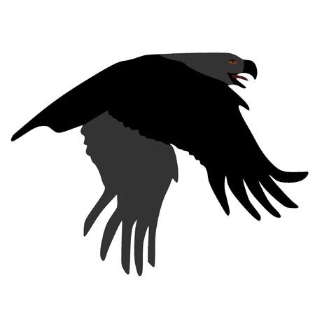 Vector image of an eagle Stock Vector - 11897483