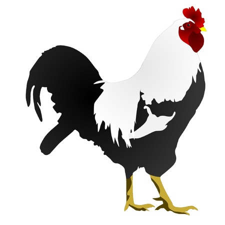 vector image of a rooster Vector